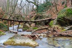 Drewniany most nad rzecznym lasem zdjęcia stock