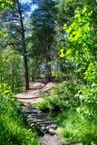 Drewniany most przez lasowej rzeki Zdjęcia Stock
