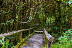 Drewniany most przy angka natury śladem w doi inthanon parku narodowym zdjęcia royalty free