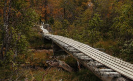 Drewniany most w lesie Zdjęcie Royalty Free