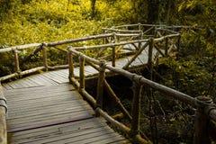 Drewniany most w mglistym tropikalnym lesie tropikalnym przy Doi Inthanon Obraz Royalty Free