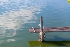 Drewniany most w rybiego gospodarstwa rolnego basenie Obraz Royalty Free