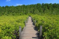 Drewniany most w zielonej mangrowe i niebieskiego nieba naturze plenerowej Obrazy Stock