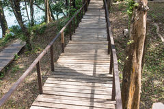 Drewniany most wzdłuż lasu Zdjęcia Stock