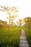 Drewniany most z światłem słonecznym, Pa Hin Ngam park narodowy, Tajlandia Zdjęcie Royalty Free