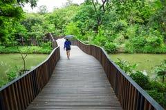 Drewniany most z kobiety odprowadzeniem zdjęcia royalty free