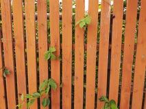 Drewniany ogrodzenie malujący w pomarańcze Zdjęcie Royalty Free