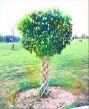 Drewniany ogrodzenie roślina Fotografia Royalty Free