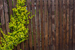 Drewniany ogrodzenie wyplatający z batami Tło Natura Zdjęcie Stock