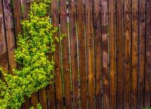 Drewniany ogrodzenie wyplatający z batami Tło Natura Zdjęcie Royalty Free