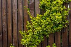 Drewniany ogrodzenie wyplatający z batami Tło Natura Obrazy Stock