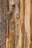 Drewniany ogrodzenie z Gnarl Fotografia Stock