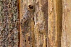 Drewniany ogrodzenie z Gnarl Zdjęcie Royalty Free