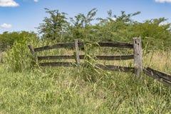 Drewniany ogrodzenie z niebieskim niebem zdjęcia royalty free