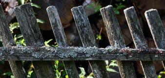 Drewniany ogrodzenie z zielonymi arywista roślinami Fotografia Stock