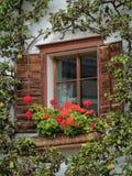 Drewniany okno z petunią i bonkrety drzewem w Hallstatt zdjęcia royalty free