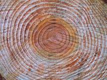Drewniany okrąg zdjęcie stock