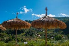 Drewniany parasol przy Herbacianą plantacją w Doi Ang Khang, Chiang Mai Zdjęcia Stock