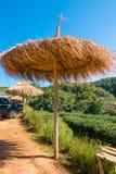 Drewniany parasol przy Herbacianą plantacją w Doi Ang Khang, Chiang Mai Obrazy Stock