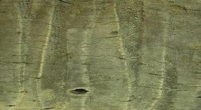 Drewniany partern obraz royalty free