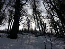Drewniany pełny śnieg Zdjęcie Royalty Free