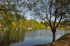Drewniany plandeki wody lustra spojrzenie Lato gorący greenfield Trawa zdjęcia royalty free