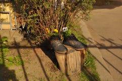 Drewniany plandeki wody lustra spojrzenie Lato gorący greenfield Trawa fotografia stock