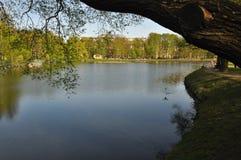 Drewniany plandeki wody lustra spojrzenie Lato gorący greenfield Trawa obrazy royalty free