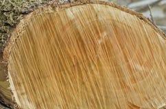 Drewniany plasterek drzewny bagażnik piłujący na ulicie Zdjęcie Stock