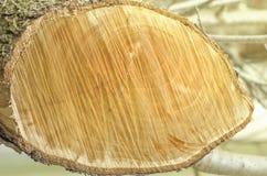 Drewniany plasterek drzewny bagażnik piłujący na ulicie Obraz Stock