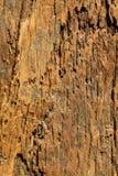 Drewniany podłogowy panel Zdjęcia Stock