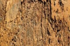 Drewniany podłogowy panel Obrazy Royalty Free