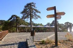 Drewniany pointer wśród świerkowych drzew obraz royalty free