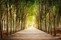 Drewniany przejście i gumowy drzewo Zdjęcia Stock
