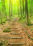 Drewniany przejście w las. Fotografia Royalty Free