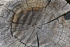 Drewniany przekroju poprzecznego tło. Zdjęcia Stock
