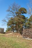 Drewniany przygotowywający dla zimy Ekologiczny drewniany ogrzewanie Pracować w leśnictwie Obrazy Stock