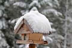 Drewniany ptasi dozownik z śniegiem Obraz Royalty Free