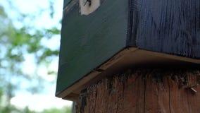 Drewniany pudełko maluje z muśnięciem zbiory wideo