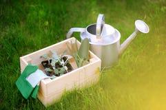 Drewniany pudełko, ogrodowe rękawiczki, podlewanie puszka, ogrodowi narzędzia i młoda rozsada, Zdjęcia Stock