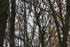 Drewniany Rumuński jesień las na deszczowym dniu zdjęcia stock