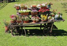 Drewniany rydwan z kwiatów garnkami dekorować ogród Obrazy Stock