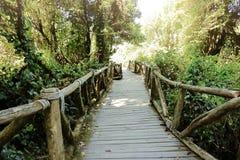Drewniany schodowy sposób dżungla wśród pięknego zielonego ulistnienia tła Fotografia Royalty Free