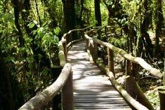 Drewniany schodowy sposób dżungla wśród pięknego zielonego ulistnienie natury tła Selekcyjna ostrość i płytka głębia pole Obrazy Royalty Free