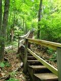 Drewniany schody na lasowej wzgórze stronie obraz royalty free