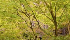 Drewniany schody prowadzi w górę halnej strony Obraz Royalty Free