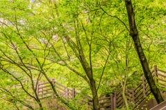 Drewniany schody prowadzi w górę halnej strony Fotografia Stock