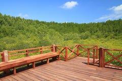 Drewniany siedzenie w zielonej mangrowe i niebieskiego nieba naturze plenerowej Obrazy Stock