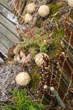 Drewniany skład z roślinami Obrazy Royalty Free