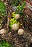 Drewniany skład z roślinami Zdjęcia Royalty Free